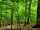Primeval beech forest of Uholka - Cooperation between Swiss & Ukraine